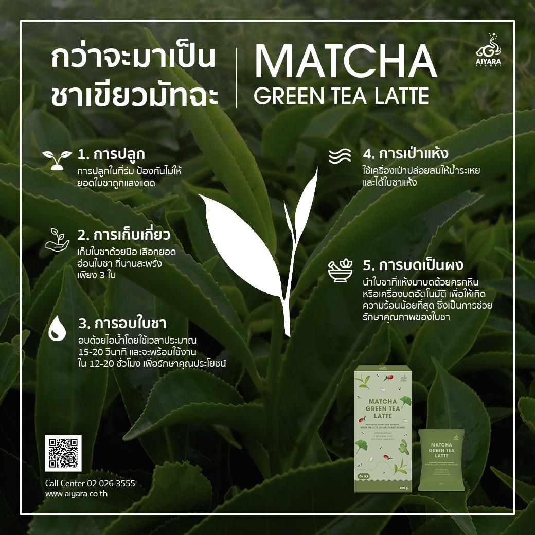(Thai) กว่าจะมาเป็นชาเขียวมัทฉะ!!